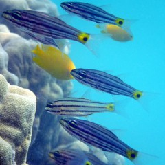 [2013] The Need to Quantify and Understand Reef Biodiversity in the Philippines for the Benefits of Filipinos