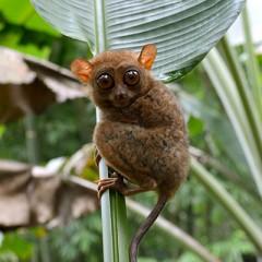 Hit List: Philippine Biodiversity Icons at Risk